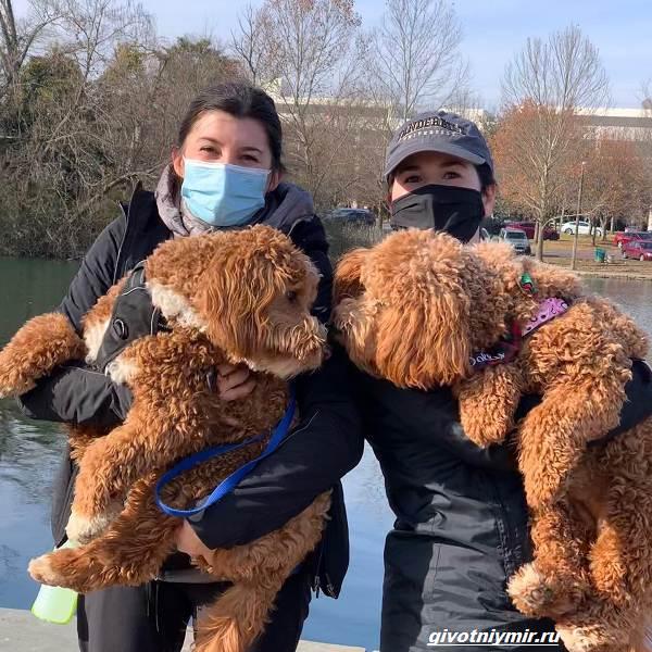 История-о-собаках-которых-разлучила-судьба-и-они-случайно-встретились-в-парке-1