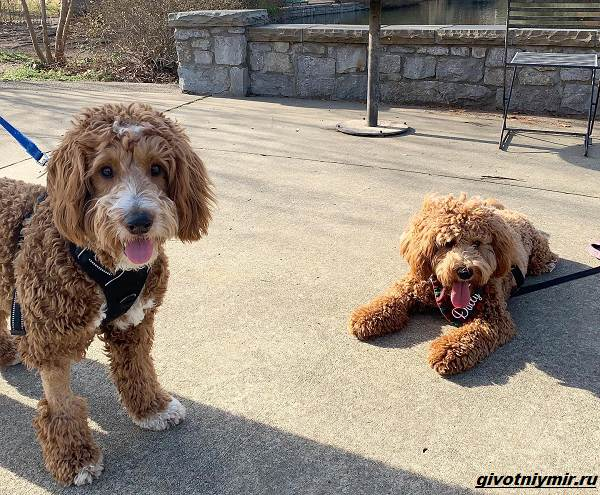 История-о-собаках-которых-разлучила-судьба-и-они-случайно-встретились-в-парке-3