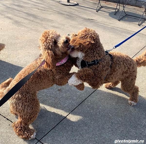 История-о-собаках-которых-разлучила-судьба-и-они-случайно-встретились-в-парке-4