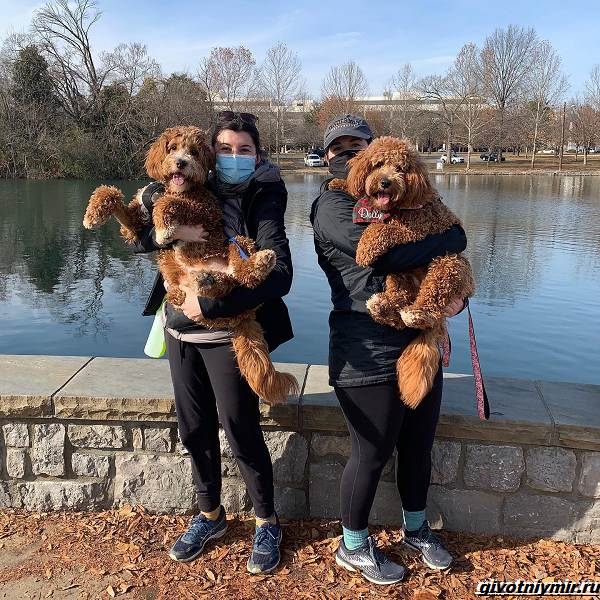 История-о-собаках-которых-разлучила-судьба-и-они-случайно-встретились-в-парке-5