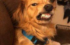 История о собаке со злобным оскалом, которую хотели усыпить, но новый хозяин научил её доброте