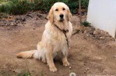 История о том, как собака не стала чьим-то обедом, а превратилась в любимую питомицу