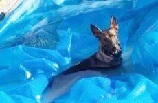 История о том, как собака сделала подкоп и пробралась в чужой бассейн. Но рады ли этому соседи?
