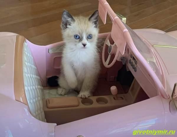 История-о-том-как-женщина-нашла-своего-пропавшего-кота-но-вернуть-домой-его-не-может-2