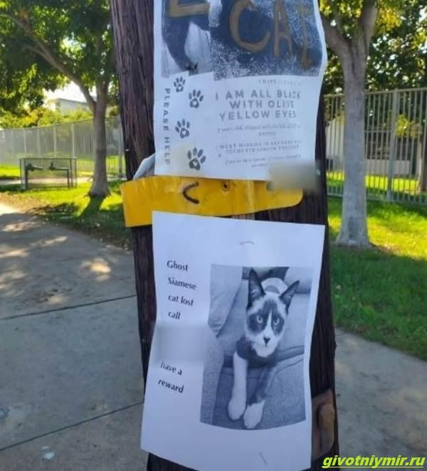 История-о-том-как-женщина-нашла-своего-пропавшего-кота-но-вернуть-домой-его-не-может-3