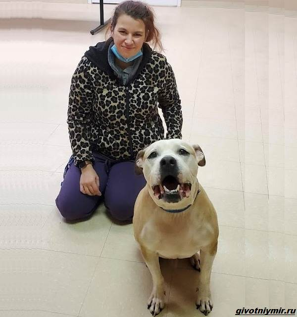 История-о-том-как-женщина-нашла-свою-украденную-собаку-в-приюте-3