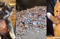 История о трёх котятах, которых спасли из машины для переработки мусора