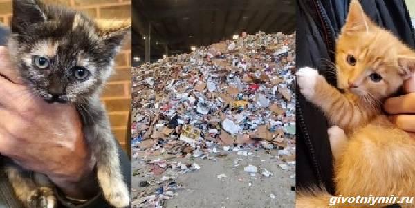 История-о-трёх-котятах-которых-спасли-из-машины-для-переработки-мусора-1