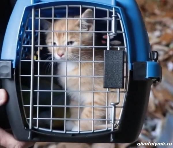 История-о-трёх-котятах-которых-спасли-из-машины-для-переработки-мусора-2