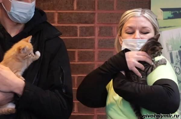 История-о-трёх-котятах-которых-спасли-из-машины-для-переработки-мусора-3