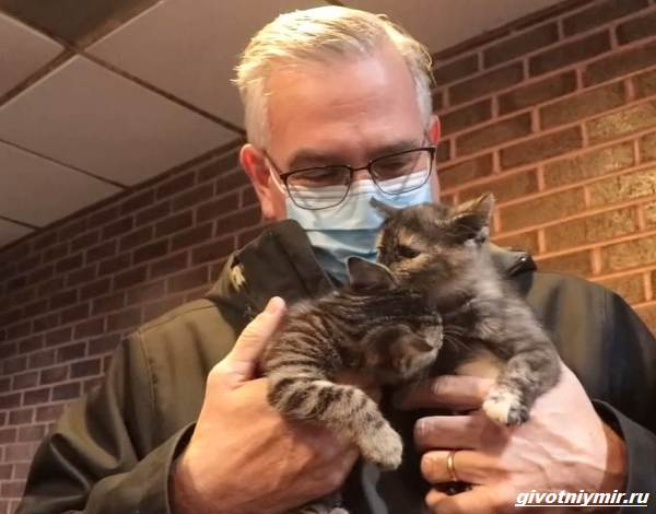 История-о-трёх-котятах-которых-спасли-из-машины-для-переработки-мусора-4