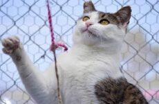 История о злом коте, от которого все отказались
