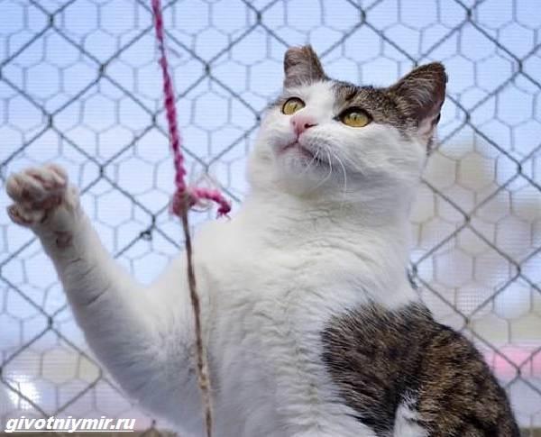 История-о-зловредном-котике-от-которого-все-отказались-1