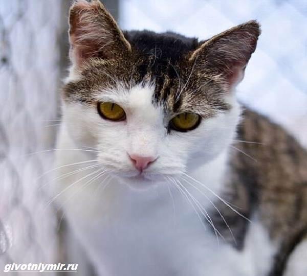 История-о-зловредном-котике-от-которого-все-отказались-2