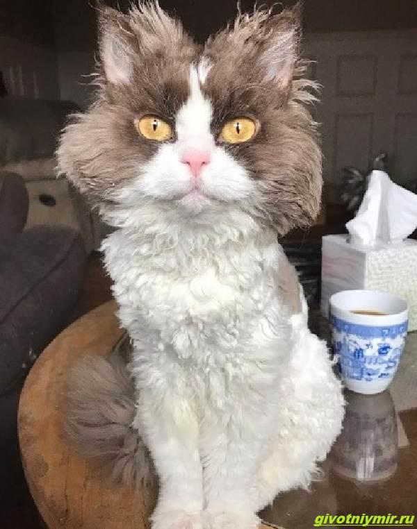 История-об-угрюмой-кошке-с-необычной-волнистой-шерстью-которая-подружилась-с-собакой-1