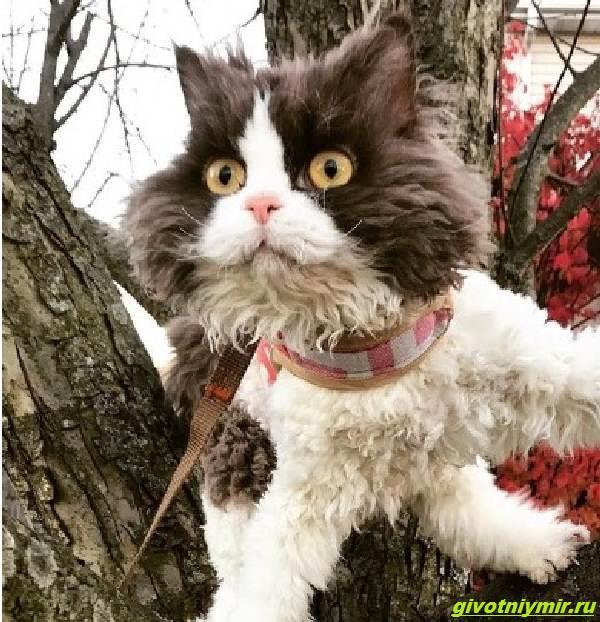 История-об-угрюмой-кошке-с-необычной-волнистой-шерстью-которая-подружилась-с-собакой-3