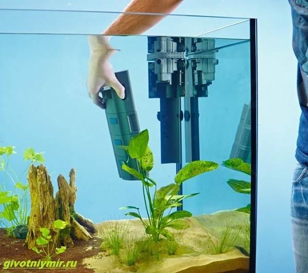 Какой-выбрать-фильтр-для-аквариума-1