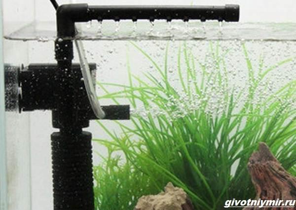 Какой-выбрать-фильтр-для-аквариума-2