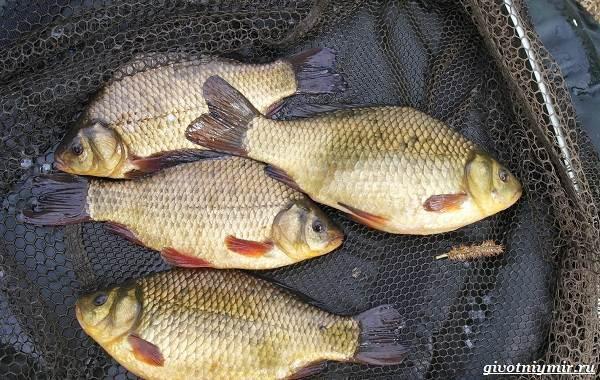 Календарь-рыболова-на-июнь-июль-август-11
