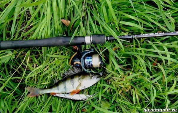 Календарь-рыболова-на-июнь-июль-август-2
