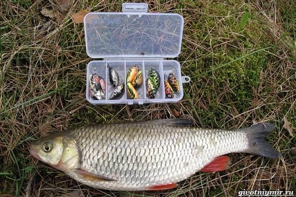 Календарь-рыболова-на-июнь-июль-август-9