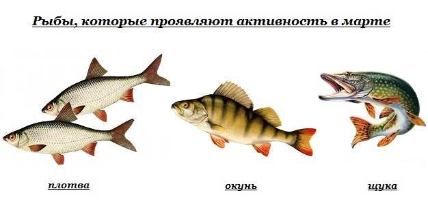 Календарь-рыболова-весенние-месяцы-10