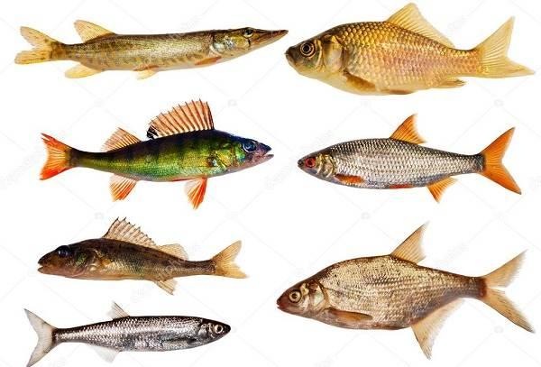 Календарь-рыболова-весенние-месяцы-11