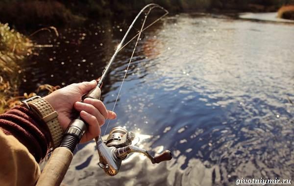Календарь-рыболова-весенние-месяцы-6