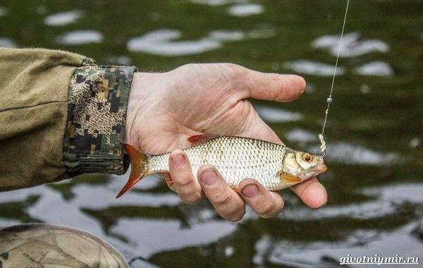 Календарь-рыболова-весенние-месяцы-7