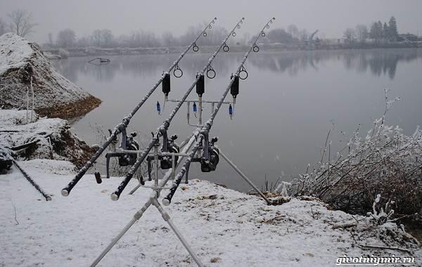 Ловля-карпа-по-открытой-воде-и-зимняя-рыбалка-на-карпов-10
