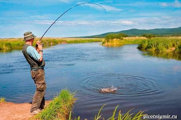 Ловля-карпа-по-открытой-воде-и-зимняя-рыбалка-на-карпов-2