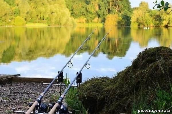 Ловля-карпа-по-открытой-воде-и-зимняя-рыбалка-на-карпов-7