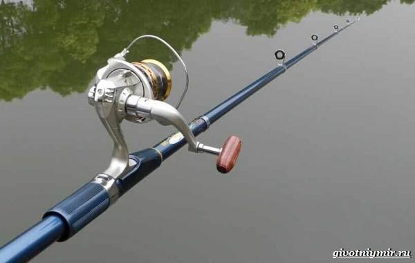 Ловля-карпа-по-открытой-воде-и-зимняя-рыбалка-на-карпов-9