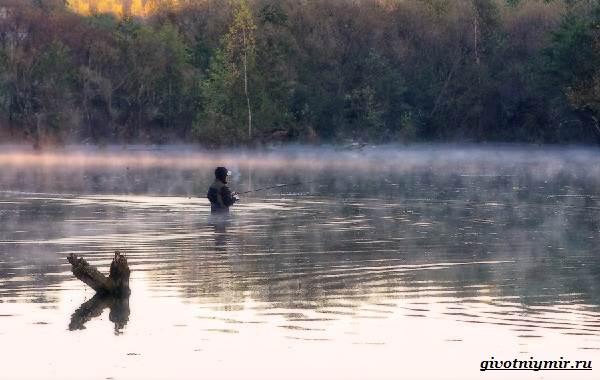 Ловля-пескаря-по-открытой-воде-и-со-льда-12