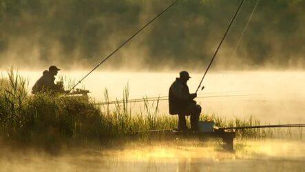 Ловля пресноводных рыб, их виды, особенности и среда обитания