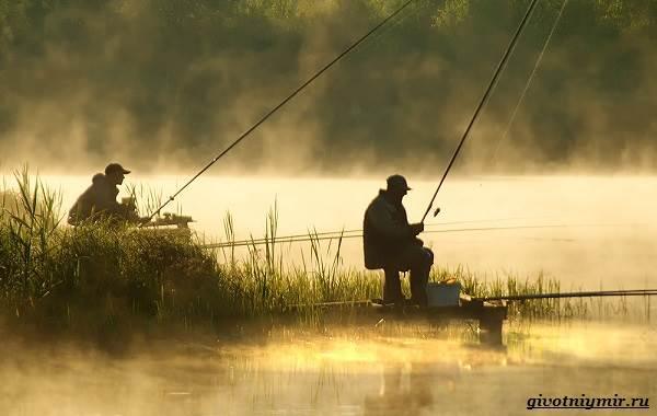 Ловля-пресноводных-рыб-их-виды-особенности-и-среда-обитания-14