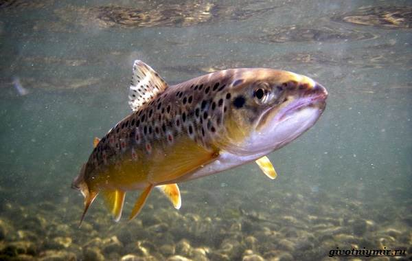 Ловля-пресноводных-рыб-их-виды-особенности-и-среда-обитания-2