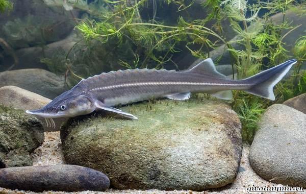 Ловля-пресноводных-рыб-их-виды-особенности-и-среда-обитания-21