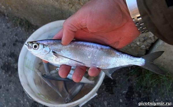 Ловля-пресноводных-рыб-их-виды-особенности-и-среда-обитания-28