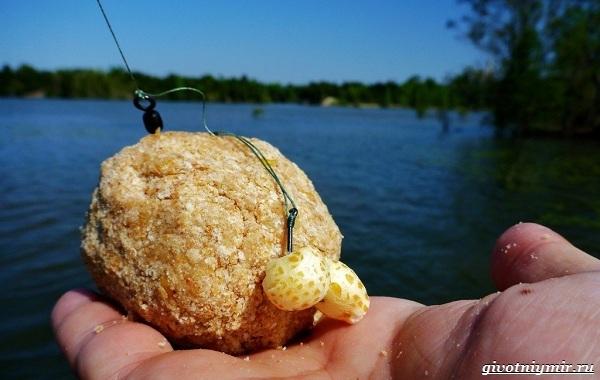 Ловля-сазана-Интересные-факты-и-случаи-от-бывалого-рыбака-13