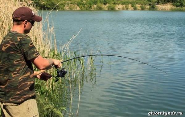 Ловля-сазана-Интересные-факты-и-случаи-от-бывалого-рыбака-5