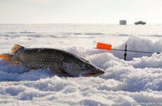 Ловля щуки зимой на разные снасти