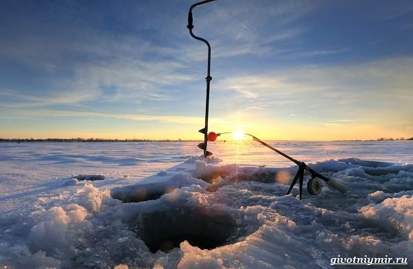 Ловля-щуки-зимой-на-разные-снасти-7