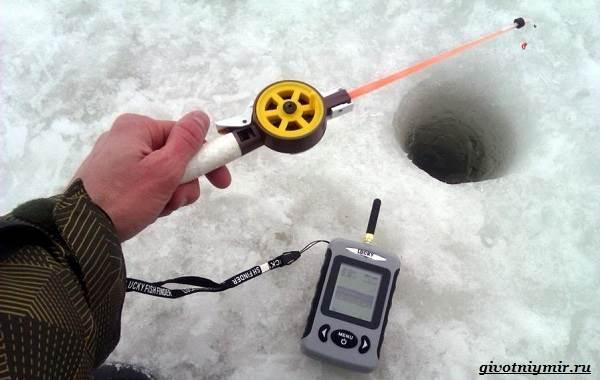 Ловля-судака-зимой-со-льда-и-по-открытой-воде-10