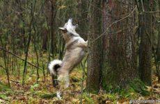 Охота на белку с собакой
