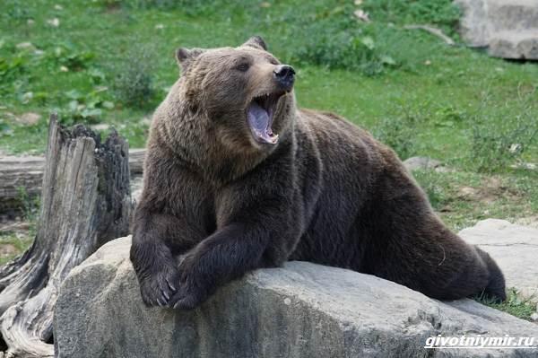 Охота-на-медведя-разными-способами-1