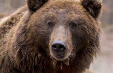 Охота на медведя разными способами