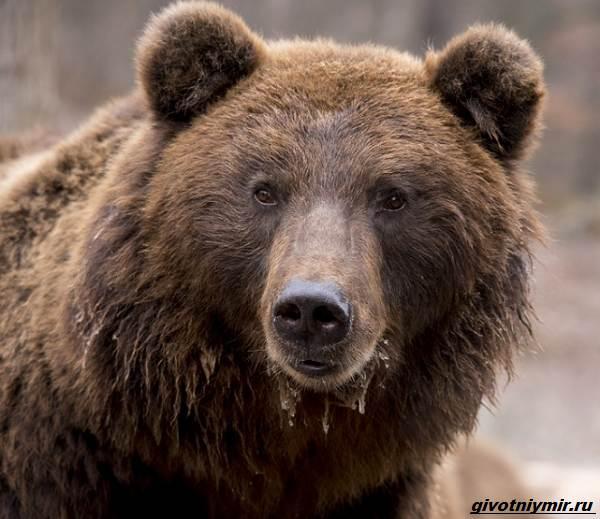 Охота-на-медведя-разными-способами-3