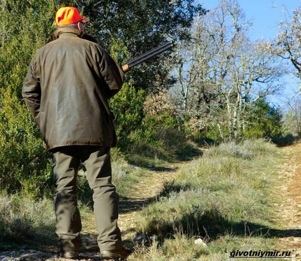 Охота-на-медведя-разными-способами-6
