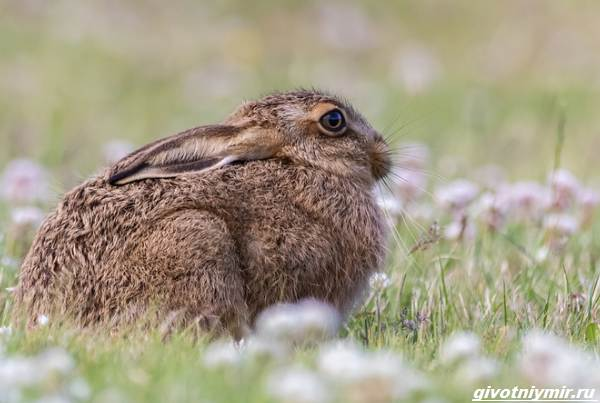 Охота-на-зайца-разными-способами-2